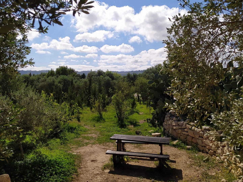 Salina park view