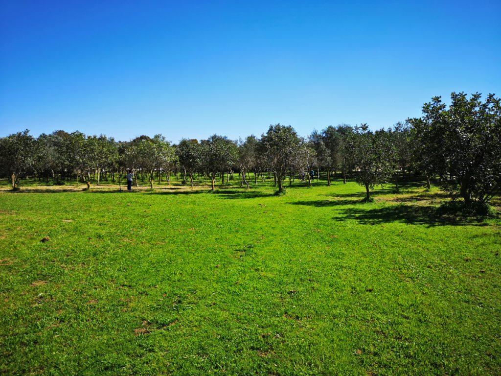 malta has no green spaces