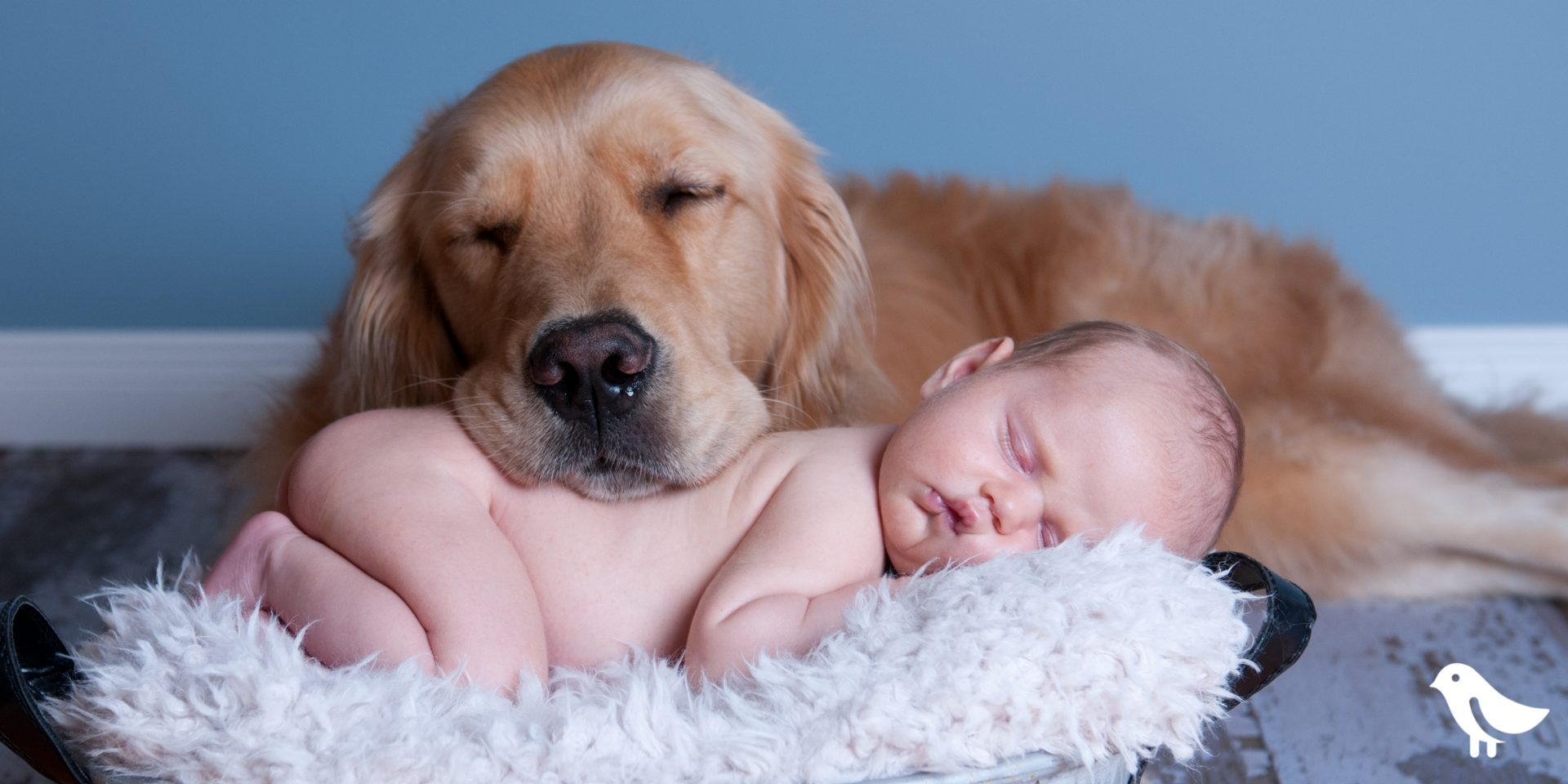 Prepare your dog for baby's arrival